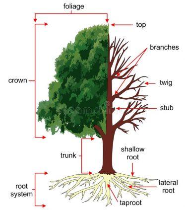 TreeAnatomy.com 30n30.club clubhouse